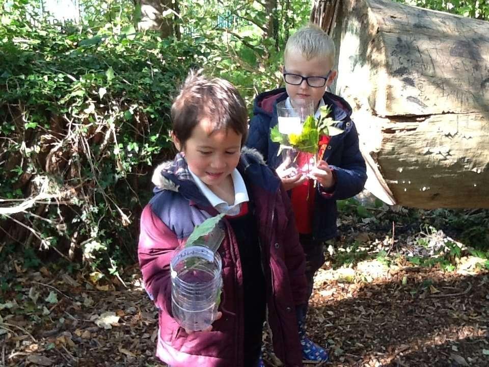 Forest School-Rain Collectors