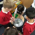 Science Investigation in Year 1